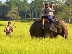 Elephant On Hunt For Tigress Kills Woman In Maharashtra