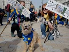 """Hundreds Of Dogs Hound Theresa May For """"Wooferendum"""" On Brexit"""