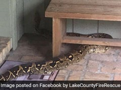 Family Stranded Outside Home, Thanks To 8-Foot Boa Constrictor Blocking Door