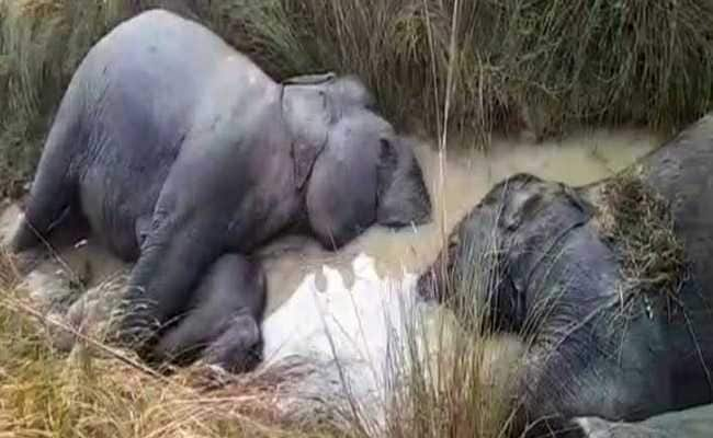 7 Elephants Electrocuted In Odisha While Passing Through A Village