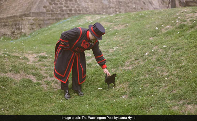Meet The Royal Ravenmaster Who Treats Birds To Biscuits Soaked In Blood