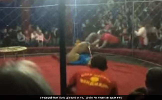 Caught On Video: Lion Slashes Girl's Face At Circus In Russia