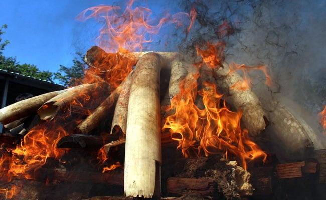 Myanmar Destroys Elephant Tusks, Pangolin Scales Worth $1.3 million