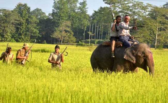 Top Court Suggests Task Force To Tackle Human-Animal Conflict Problem