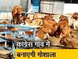 Video : मध्य प्रदेश : चुनावी जंग में मुद्दा बनी गाय