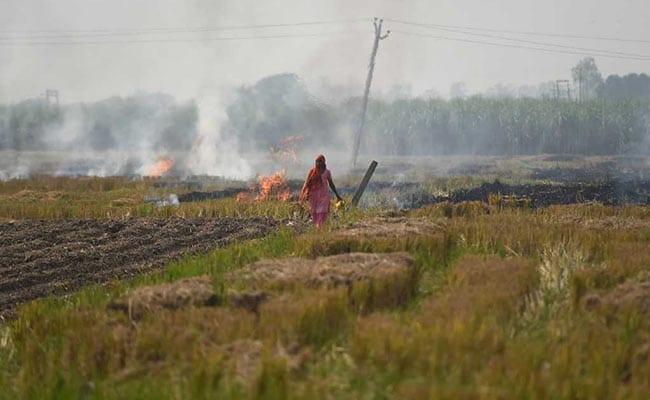 How Will Crop Burning Be Tackled, Green Tribunal Asks Punjab, Haryana, UP