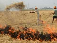 Stubble Burning Continues In Haryana Despite Ban, FIR Against Defaulters