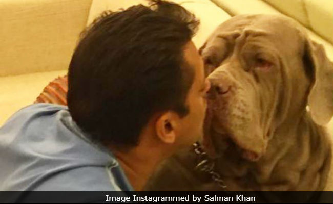 Salman Khan's Pet Dog My Love Dies