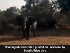 गाड़ी में बैठकर खींच रहे थे जानवरों की तस्वीरें, हाथी ने गुस्से में किया ऐसा, वायरल हुआ VIDEO