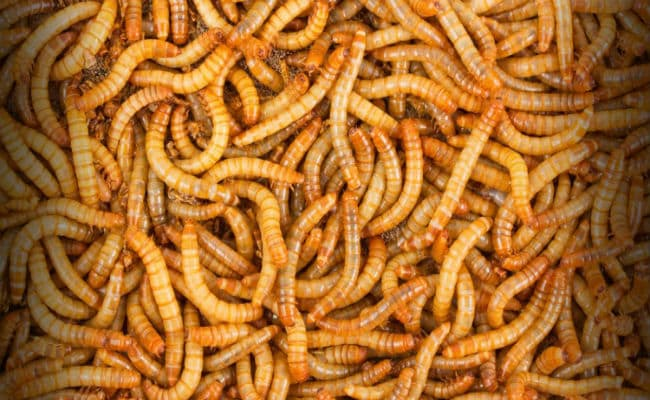Make A Meal Out Of Mealworms, Hong Kong Startup Says