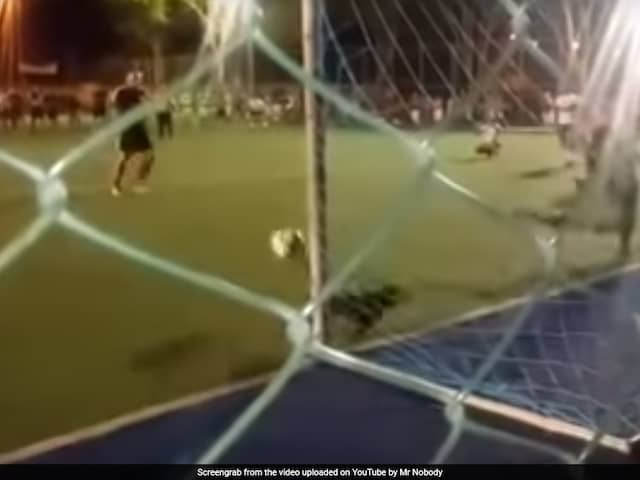A Dogs Incredible Penalty Save During A Football Match. Watch Video