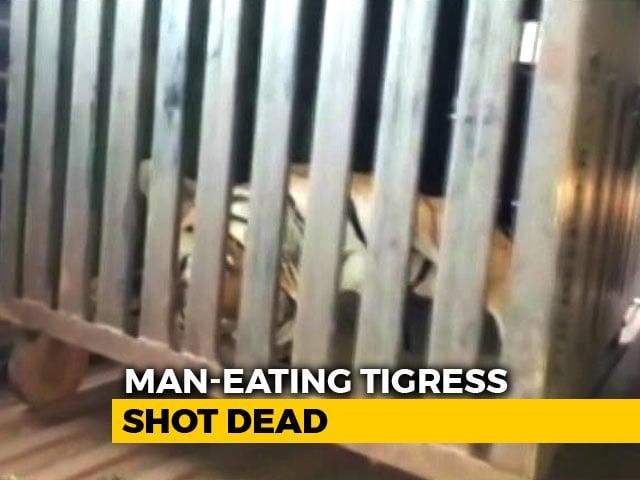 "Video : Maneka Gandhi Slams Maharashtra For ""Brutal Murder"" Of Tigress Avni"