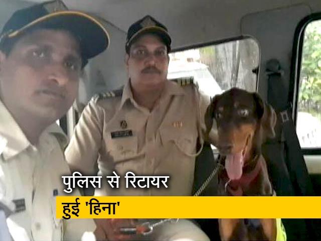 Video : मुंबई पुलिस से रिटायर हुई 'हिना'