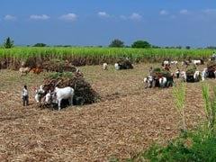 Farmers Go On Indefinite Strike In Noida Over Land Being Acquired