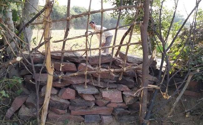 माता से आवारा होती गायों से खेतों को कैसे बचा रहे हैं राजस्थान के किसान