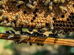 Rajasthan Poll Officials Asked Man To Remove Beehive, Stung By His Reply