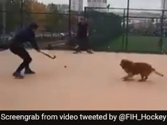 Watch: Dog Has A Field Day Playing Hockey Before World Cup 2018