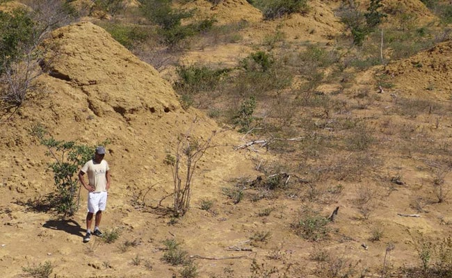 Termites In Brazil Built Millions Of Huge Mounds, The Size Of Minnesota