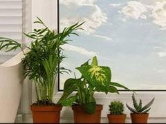 घर के लिए 4 आर्टिफिशियल पौधे