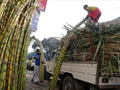 India Sugar Subsidies Hurt Our Farmers, Says Australia As It Goes To WTO