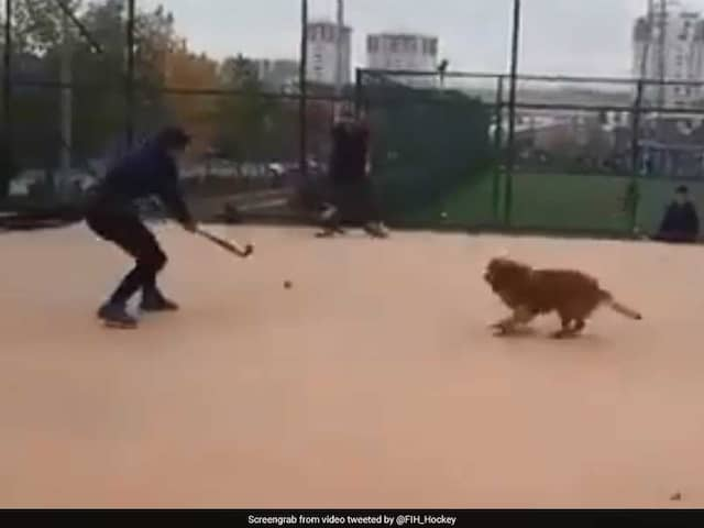Hockey World Cup 2018: Dog Has A Field Day Playing Hockey. Watch Video