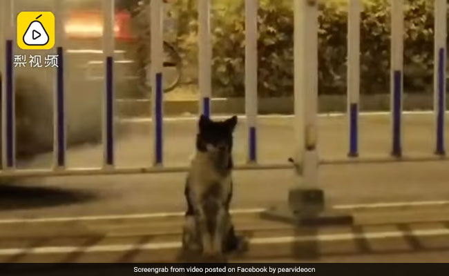 Faithful dog waits for 80 days by Chinese road where owner died