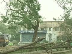 'கஜா புயலால் 1.27 லட்சம் மரங்கள் சாய்ந்துள்ளன!' - முதல்வர் 'பகீர்' தகவல்