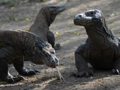 Keen To See A Komodo Dragon? $500 Please: Indonesian Governor To Tourists