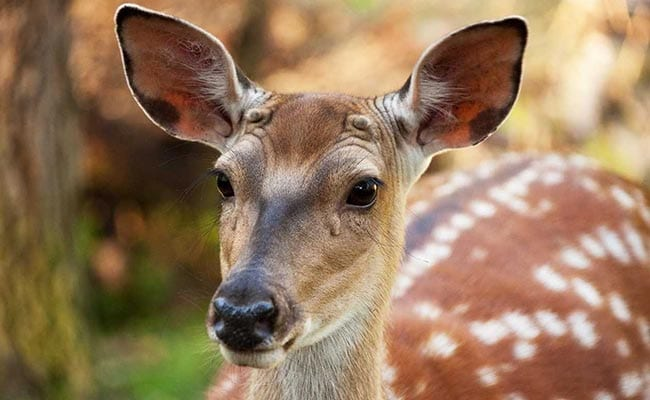 Watch Disney's Animated Movie 'Bambi', Court Tells Criminal Deer Killer