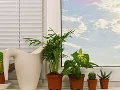 4 Ways To Add Greenery To Your Home Even If You Don't Have A Green Thumb