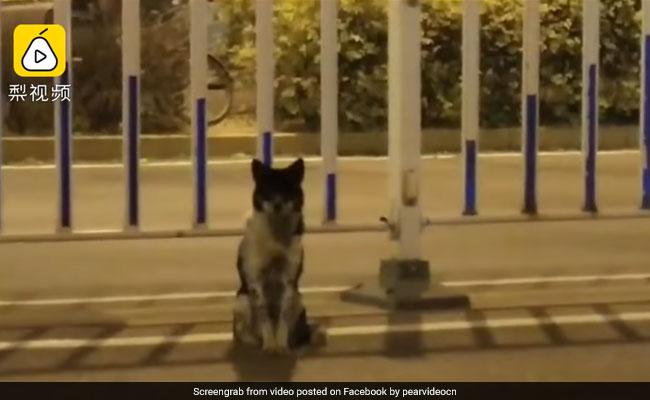 रोड एक्सिडेंट में मालिक की मौत, 80 दिनों से कुत्ता वहीं बैठा कर रहा है इंतज़ार, VIDEO देख हो जाएंगे इमोशनल