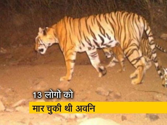 Videos : आदमखोर बाघिन अवनि को मारा गया