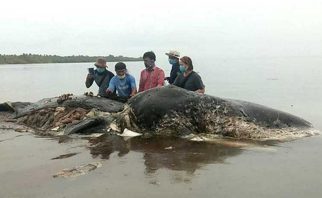 Authoritative dead sperm whale are right