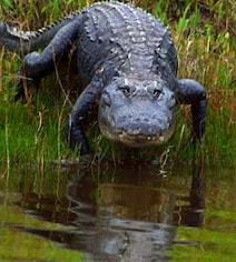 Cops Thought He Was Eaten By Alligators In 2000. Now Wife Is Put On Trial