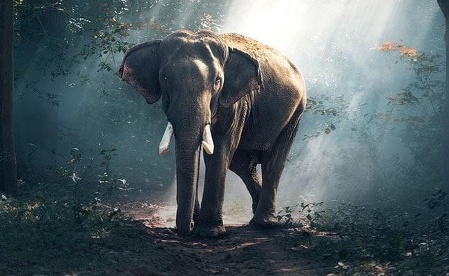 Elephant Destroys House In Jharkhand Village, Kills 4 People