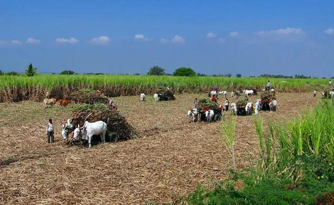 अंधेर नगरी चौपट खेती, टके सेर झांसा, टके सेर जुमला, खेती में फेल मोदी सरकार