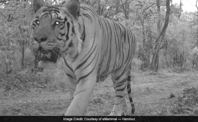 When Maharashtra Students Caught Wild Animals Taking Over Their Schools