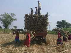 150 Farmers Committed Suicide In Madhya Pradesh This Year: BJP