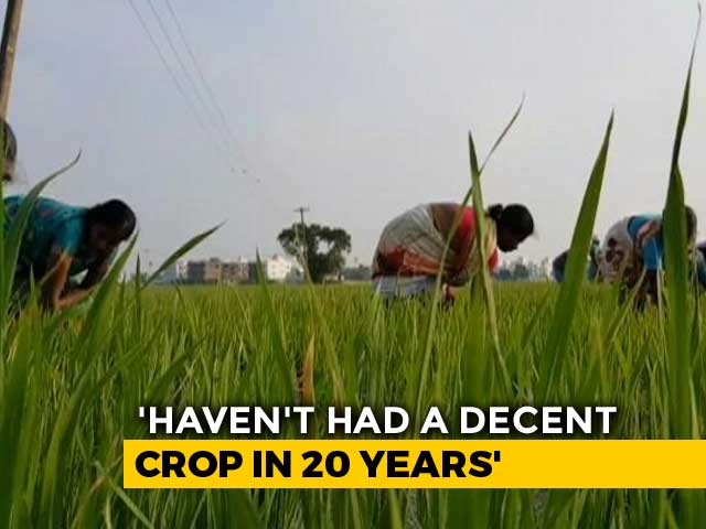 Video : Haryana Farmers On Rain Deficit, Debt Trap In The State