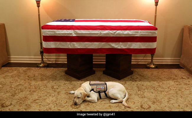 'Mission Complete': George HW Bush's Service Dog Pays Last Respects