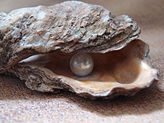 Man Finds Valuable Pearl In Oyster Lunch At Restaurant