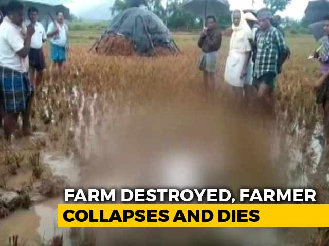 Video : A Heartbreaking Image. How A Farmer Collapsed And Died In His Field