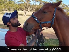Ravindra Jadeja Spends Quality Time With Horses Ahead Of Perth Test. Watch