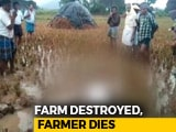 Video : Andhra Farmer Collapses In Field After Cyclone Phethai Destroys Crop