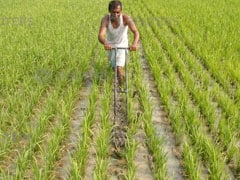 Government Approves Policy To Boost Farm Exports