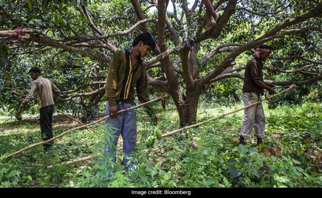 Government Considering Rs 70,000 Crore Plan To Pay Cash to Farmers: Report