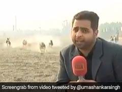 कैमरे के सामने देख रहा था पाकिस्तानी रिपोर्टर, तेज रफ्तार से दौड़ते हुए आए कुत्ते और फिर... देखें Video