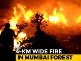 Video : 4 Km-Wide Mumbai Forest Fire Doused Before It Reached Residential Areas