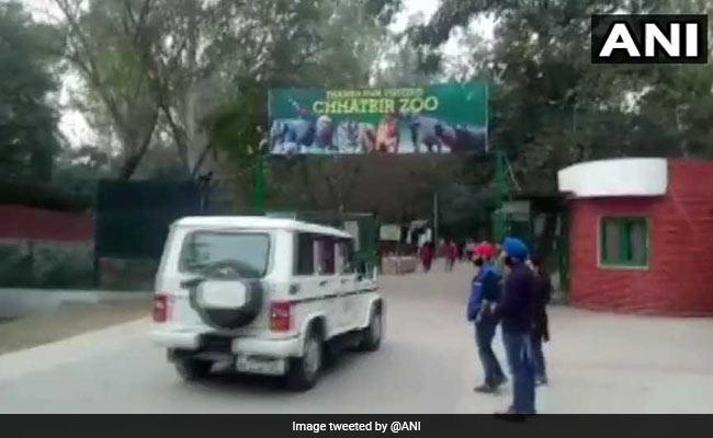 पंजाब के एक चिड़ियाघर में 2 शेरों ने युवक को मार डाला...