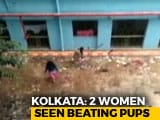 Video : 16 Dead Pups Found At Kolkata Hospital, Gruesome Video Surfaces Later